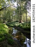 Small photo of Woodland stream in Cally Woods, Gatehouse of Fleet.