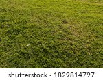 green grass for background... | Shutterstock . vector #1829814797
