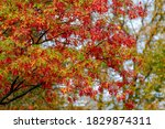 Nature Autumn Background With...