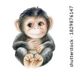 Chimpanzee Cub  Baby Monkey...