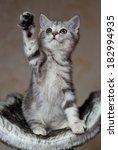 Stock photo little kitten 182994935