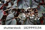 Natural Leaves Dark Tone Color...