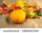 Autumn Background  Colorful...