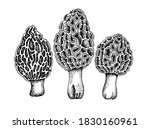 set of vector drawing of... | Shutterstock .eps vector #1830160961