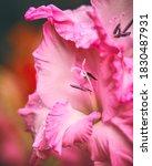 Flora Flowers Wildlife Macro...