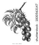 grape tomato branch vintage... | Shutterstock .eps vector #1830563147