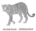 leopard black on white ... | Shutterstock .eps vector #1830626564