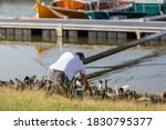 Man Feeding Ducks By The Harbor