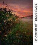 Fall Cornfield Sunrise   Acton  ...