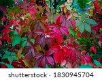Beautifully Colourful Autumn...