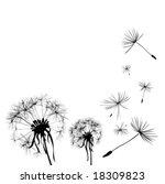 Two Dandelions In Wind On Ligh...