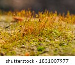 Macro Photography With Moss ...