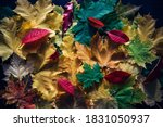 Heap Of Colorful Autumn Leaves  ...
