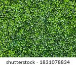 Artificial Green Leaves...