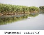 danube delta landscape  ... | Shutterstock . vector #183118715