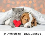 Cute Kitten And Jack Russell...