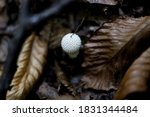 this is mushrooms photo for you ...   Shutterstock . vector #1831344484