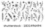 set of delicate greenery ... | Shutterstock .eps vector #1831496494