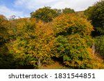 Aerial View Of Trees With...