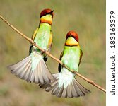 colorful bee eater bird ... | Shutterstock . vector #183163379