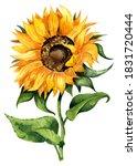 Well Done Sunflower. Yellow...