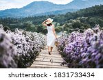 Small photo of Winter travel relax vacation concept, Young happy traveler asian woman with dress sightseeing on Margaret Aster flowers field in garden at Chiang Mai, Thailand