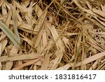 a pile of old bamboo leaves | Shutterstock . vector #1831816417
