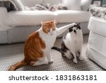 A Brown And White Cat Puts His...