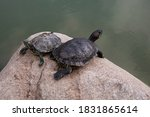 Turtles Spend Most Of Their...