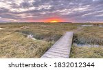 Boardwalk In Tidal Marshland...