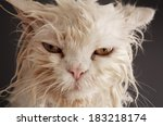 Stock photo funny wet cat 183218174