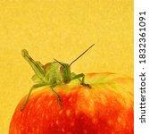 A Green Grasshopper Digitally...