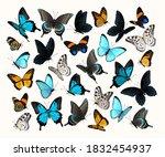big vector set of high detailed ... | Shutterstock .eps vector #1832454937