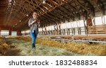 Small photo of Young Caucasian woman using tablet device and walking in farm stable. Female farmer tapping and scrolling on gadget computer in shed. Technology in farming. Sheep flock on background.