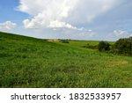 A View Of A Dense Field  Meado...