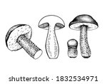 vector set of drawing boletus... | Shutterstock .eps vector #1832534971