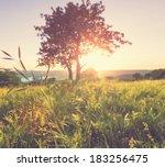 summer meadow | Shutterstock . vector #183256475