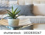Home Decor Style With Potted...