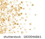 Gold Seashells Vector  Golden...