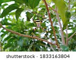 This Entomology Insect Is The...
