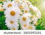 Summer Bright Flowers Growing...