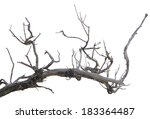 Dry Dead Branch Isolated On...