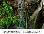 Natural Water Source In The...