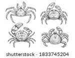 set of illustrations of crabs... | Shutterstock .eps vector #1833745204