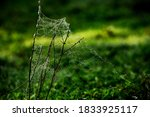 Flowers Packed In Spider Web...