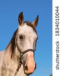 A Portrait Of A White Horse In...