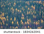 Forest With Mixed Coniferous...