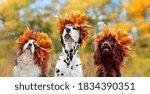 Head Portrait Of Three Dogs...