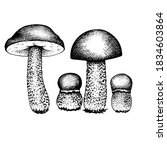 vector set of drawing boletus... | Shutterstock .eps vector #1834603864