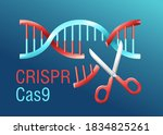 crispr cas9   gene editing...   Shutterstock .eps vector #1834825261